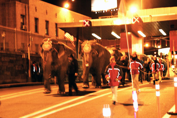 Elephants proceeded through Queens toll plaza in Long Island City en route through Queens Midtown Tunnel to Manhattan for last year's circus engagement at Madison Square Garden.