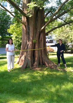Jennifer Barry, left, Karen Timko, right, with a Dawn Redwood tree.