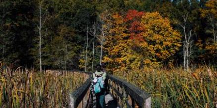 Ride Metro-North to Experience the Splendors of Fall